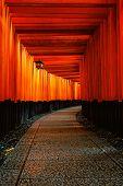 The Red Torii Gates Walkway At Fushimi Inari Taisha Shrine In Kyoto, Japan. poster
