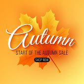 Autumn Sale. Seasonal Background. Maple Leaf With Text. Start Of A Seasonal Sale With Big Discounts. poster