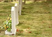 pic of hearse  - white military grave markers or headstones in a neat row with fresh flower tributes - JPG