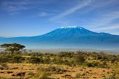 Amboseli Park is the most visited park. The snow peak of Kilimanjaro. Savanna with bushes and desert poster