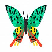 Isolated Object Of Butterfly And Zoology Logo. Set Of Butterfly And Wildlife Stock Symbol For Web. poster