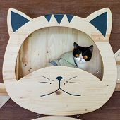 Funny Portrait Of  Black And White Cat Looking With Funny Emotions Face  On The Cat Face Shelf. Cute poster