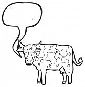 image of moo-cow  - mooing cow - JPG