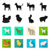 Vector Illustration Of Breeding And Kitchen Logo. Set Of Breeding And Organic Stock Vector Illustrat poster
