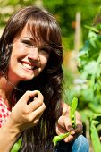 foto of nibbling  - Gardening in summer  - JPG