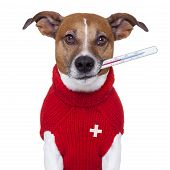 stock photo of vet  - sick ill cold dog with fever suffering - JPG