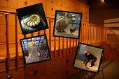 pic of dodo  - archives - JPG