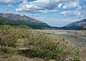 pic of denali national park  - The Toklat River in Alaska - JPG