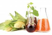 stock photo of millet  - Conceptual photo of bio fuel - JPG