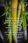 stock photo of confucious  - Confucious quote and bamboo  - JPG