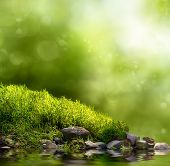 picture of wetland  - Square background with grass stones and water in the foreground over out of focus trees and sunlight - JPG