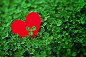 foto of red clover  - Red paper hearts in green clover - JPG