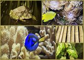 image of glass frog  - Underwater World aquarium frog toad bamboo branches - JPG