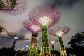SINGAPORE-FEB 14: Night view of The Supertree Grove at Gardens by the Bay on Feb 14, 2014 in Singapo