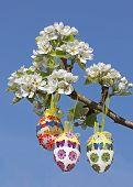 stock photo of handicrafts  - three easter eggs on blooming pear tree - JPG