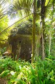 pic of coffin  - The traditional burial site of Pana deep into the jungle - JPG