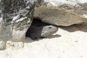 foto of yucatan  - Mexican iguana at Cancun Beach on the Yucatan - JPG