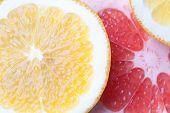 stock photo of valencia-orange  - Slices of citrus  - JPG