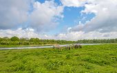 image of herd horses  - Herd of horses in nature under a blue cloudy sky - JPG