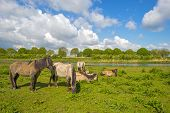 image of herd horses  - Herd of horses in nature under a blue cloudy sky in spring - JPG
