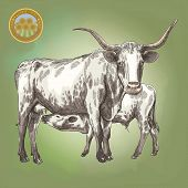 image of calf cow  - vector illustration of a cow and her little calf - JPG