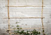 image of creeper  - Green creeper plant climbing a  ladder - JPG