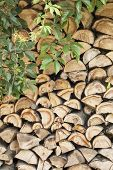 picture of creeper  - creeper on the pile of firewood background - JPG