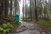 stock photo of rainy day  - Young Hiker wearing green raincoat walking on Tatry forest path on rainy day - JPG