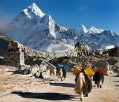 picture of caravan  - Ama Dablam with caravan of yaks and prayer flags  - JPG