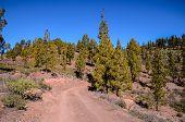 foto of dirt road  - Long Straight Dirt Desert Road disappears into the Horizon in Gran Canaria Spain - JPG