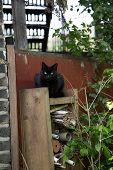 foto of witch  - Funny cat keep watch bevore witch cottage - JPG