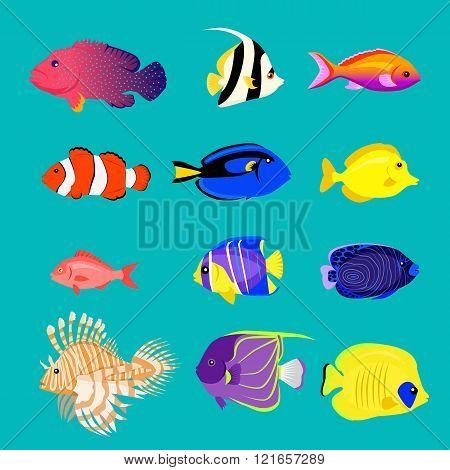 Set Of Sea Fish Color Design Flat Poster