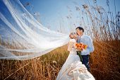 image of wedding couple  - Kissing wedding couple in high grass - JPG