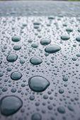 stock photo of mg  - rain drops on a green mg