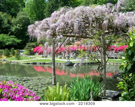 Japanese Garden And Wisteria Arbor Poster ID:2218309