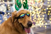 Cute Golden Retriever With Bokeh Background poster
