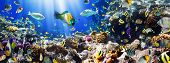 image of coral reefs  - Photo of a tropical Fish on a coral reef - JPG