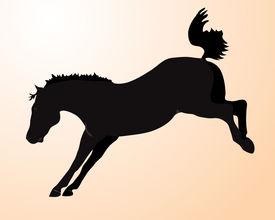 pic of bucking bronco  - Illustration of a wild black bucking bronco horse - JPG