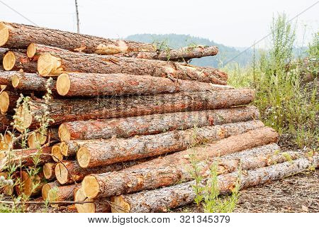 poster of Pine Logs Ready For Transportation In Logging In Russian Siberia Outdoor On Summer Day