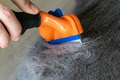 Grooming Brushing Gray Pretty Cute Cat With A Special Brush For Grooming. Lots Of Furs After Combing poster