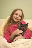 Happy Little Girl With Grey Cat In Bed. Chartreux Cat. British Shorthair Breed. Korat Grey Cat In Ha poster