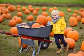 Little Boy On A Tour Of A Pumpkin Farm At Autumn. Child Standing Near Wheelbarrow On Field With Gian poster