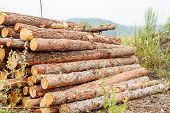 Pine Logs Ready For Transportation In Logging In Russian Siberia Outdoor On Summer Day poster