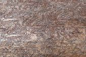 Abstract Pattern In Wood, Caused By Bark Beetles Under The Bark Of A Tree Trunk poster