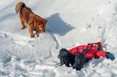 A Lifeguard Dog Found The Boy Unconscious In The Snowy Mountains. Rescue Dog. Helping Those Lost In  poster