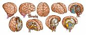 Color Brain Set Collection In Different Views Vector. Many Kinds And Modification Of Cyber And Human poster