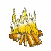 Traditional Burning Firewood Vector. Forest Burn Firewood For Warm. Warming Camping Tourist Campsite poster