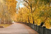 Sunlight Rays In Autumn Park. Sunlight Through Yellow Autumn Trees And Leaves. Alley In A Park With  poster