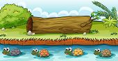 pic of terrapin turtle  - Illustration of turtles in the river - JPG