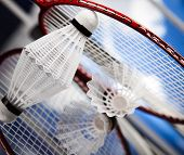 stock photo of shuttlecock  - Shuttlecock on badminton racket  - JPG